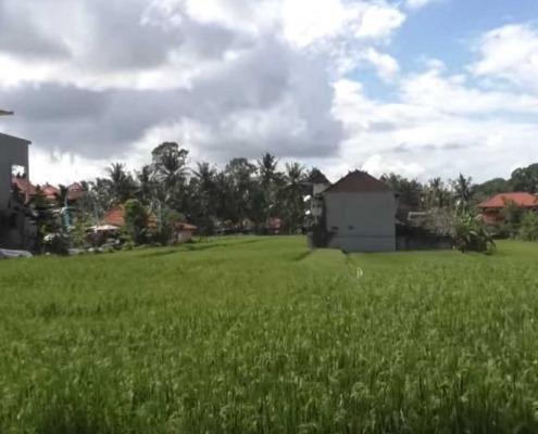 Rice Fields Walk / Ubud