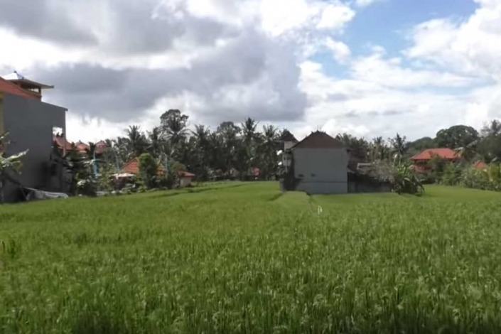 Rice Fields Walk / Ubud